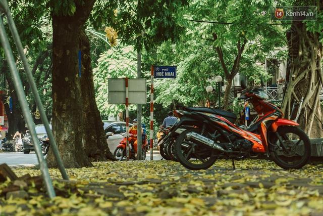 Con đường cây huyền thoại ở Hà Nội lại phủ đầy lá vàng rồi, phải chăng là mùa thu sắp về? - Ảnh 8.