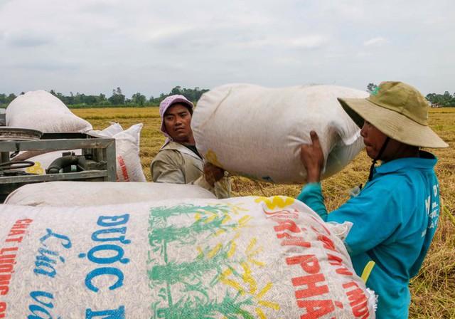 Giá cao, lúa gạo khởi sắc  - Ảnh 2.