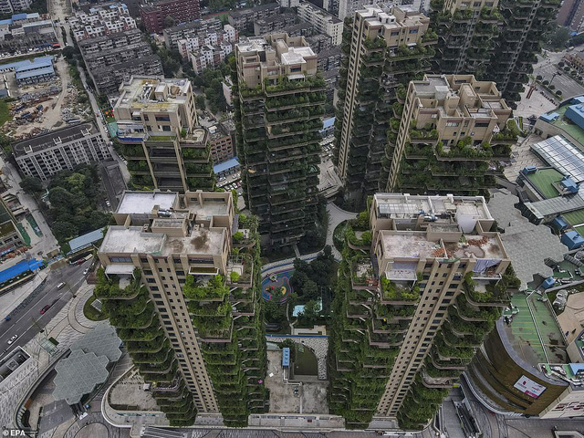Trung Quốc tham vọng xây thiên đường sinh thái nhưng lại hóa thành phố ma vì… muỗi - Ảnh 5.