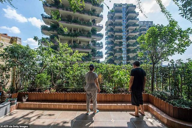 Trung Quốc tham vọng xây thiên đường sinh thái nhưng lại hóa thành phố ma vì… muỗi - Ảnh 2.