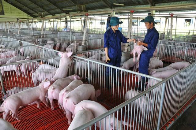 Bộ trưởng Nông nghiệp: Soi kính hiển vi cũng không thấy sản phẩm chăn nuôi xuất khẩu - Ảnh 2.