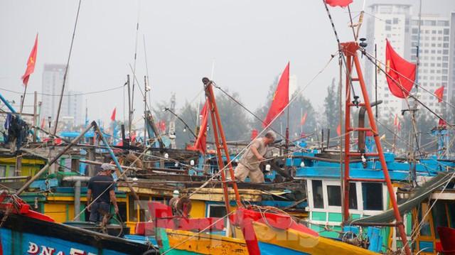 Người dân Đà Nẵng hối hả neo đậu, di dời tàu thuyền chống bão số 5 - Ảnh 12.