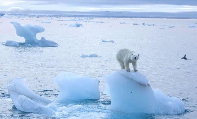 Một khối băng rộng hơn thành phố Paris vừa vỡ ra khỏi Bắc Cực, các nhà khoa học lo sợ đó là một phản ứng dây chuyền - Ảnh 3.