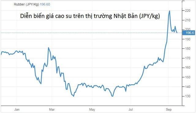 Thị trường cao su chuyển từ bi quan sang lạc quan về triển vọng giá - Ảnh 1.