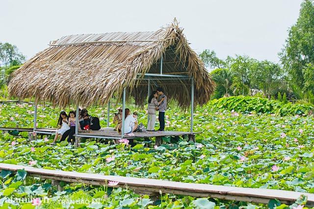 Mới tháng 9, cánh đồng hoa hướng dương và đầm sen ngay trong Sài Gòn đã nở cực rộ đẹp như Tết, tốn có 40.000 đồng được ngắm cả ngày trời! - Ảnh 13.
