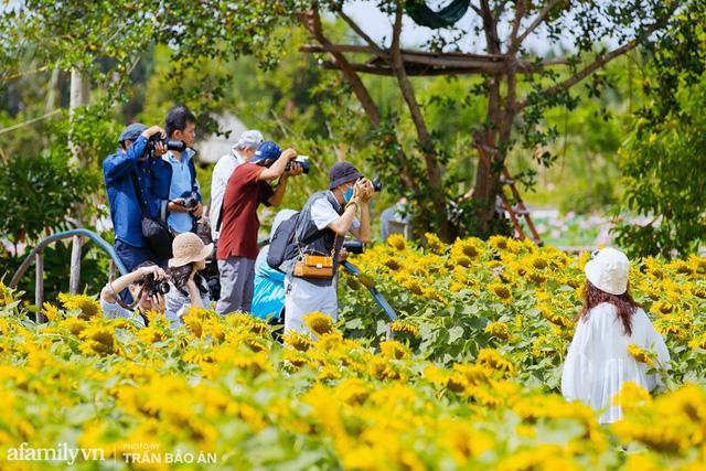Mới tháng 9, cánh đồng hoa hướng dương và đầm sen ngay trong Sài Gòn đã nở cực rộ đẹp như Tết, tốn có 40.000 đồng được ngắm cả ngày trời! - Ảnh 14.