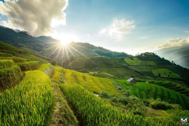 Thu năm nay nhất định phải lên Mù Cang Chải ngắm lúa chín vàng ươm trên những thửa ruộng bậc thang: Đẹp đến ngây ngất lòng người! - Ảnh 5.