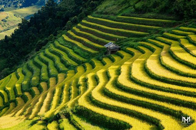 Thu năm nay nhất định phải lên Mù Cang Chải ngắm lúa chín vàng ươm trên những thửa ruộng bậc thang: Đẹp đến ngây ngất lòng người! - Ảnh 4.