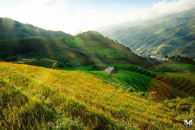 Thu năm nay nhất định phải lên Mù Cang Chải ngắm lúa chín vàng ươm trên những thửa ruộng bậc thang: Đẹp đến ngây ngất lòng người! - Ảnh 1.