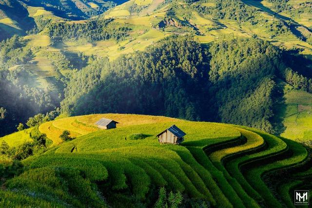 Thu năm nay nhất định phải lên Mù Cang Chải ngắm lúa chín vàng ươm trên những thửa ruộng bậc thang: Đẹp đến ngây ngất lòng người! - Ảnh 6.