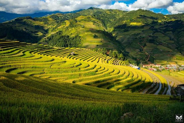 Thu năm nay nhất định phải lên Mù Cang Chải ngắm lúa chín vàng ươm trên những thửa ruộng bậc thang: Đẹp đến ngây ngất lòng người! - Ảnh 7.