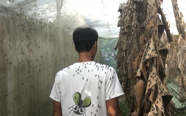 Nhiều nông dân thành tỷ phú nhờ nuôi…ruồi, ốc, ba ba, cá đặc sản  - Ảnh 1.