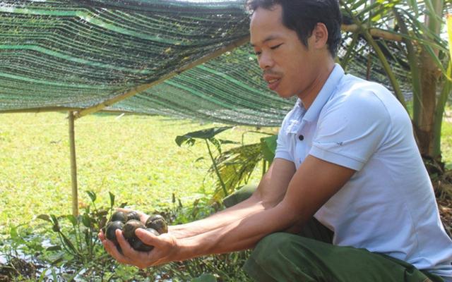 Nhiều nông dân thành tỷ phú nhờ nuôi…ruồi, ốc, ba ba, cá đặc sản  - Ảnh 4.