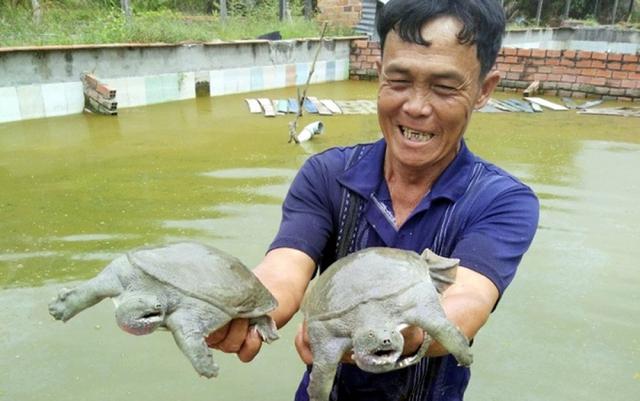 Nhiều nông dân thành tỷ phú nhờ nuôi…ruồi, ốc, ba ba, cá đặc sản  - Ảnh 6.