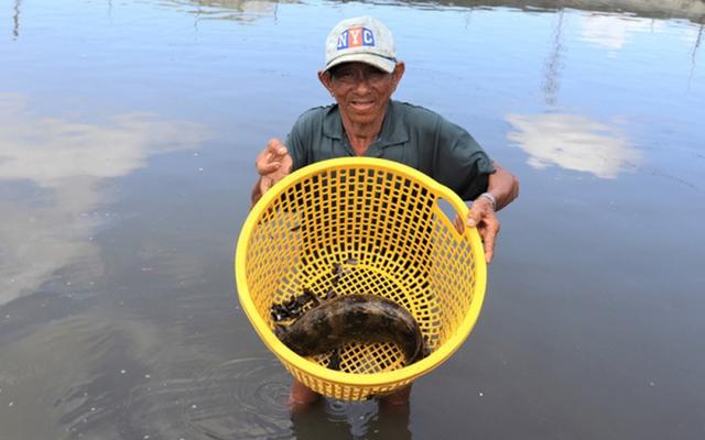 Nhiều nông dân thành tỷ phú nhờ nuôi…ruồi, ốc, ba ba, cá đặc sản  - Ảnh 7.