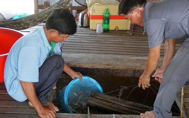 Nhiều nông dân thành tỷ phú nhờ nuôi…ruồi, ốc, ba ba, cá đặc sản  - Ảnh 8.