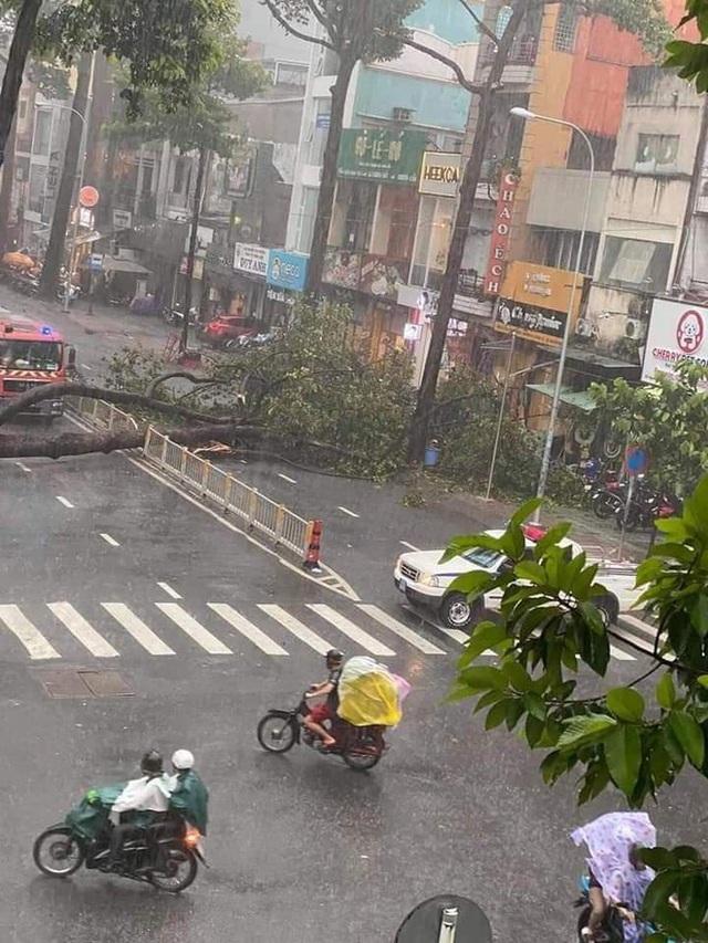 Người đàn ông bị cây ngã đè trên đường ở Sài Gòn đã tử vong - Ảnh 1.