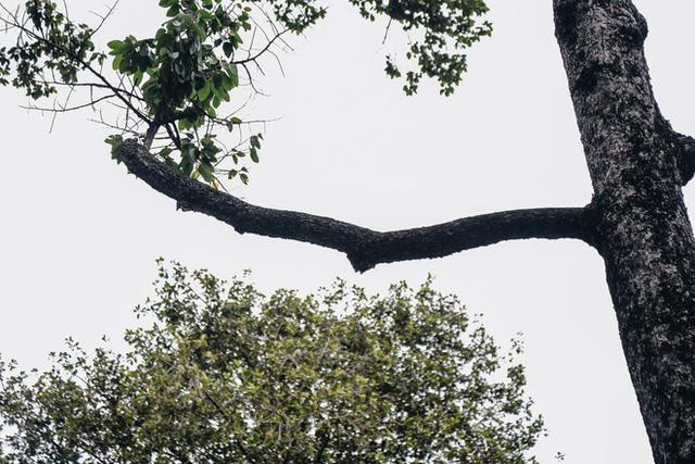 Sau vụ cây xanh bật gốc đè chết người: Vẫn còn nhiều cây đã già cỗi có rễ lộ thiên, nhánh vươn ra mặt đường ở Sài Gòn - Ảnh 12.