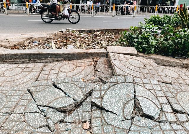 Sau vụ cây xanh bật gốc đè chết người: Vẫn còn nhiều cây đã già cỗi có rễ lộ thiên, nhánh vươn ra mặt đường ở Sài Gòn - Ảnh 3.