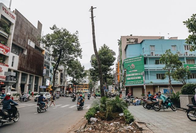 Sau vụ cây xanh bật gốc đè chết người: Vẫn còn nhiều cây đã già cỗi có rễ lộ thiên, nhánh vươn ra mặt đường ở Sài Gòn - Ảnh 4.