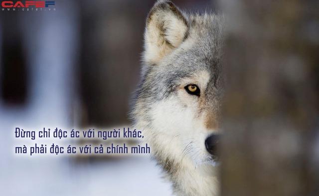 Người thành công phải tư duy như sói đầu đàn: Không chỉ độc ác với người khác, mà phải độc ác với chính mình - Ảnh 1.