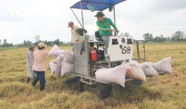 Gạo vào EU sau EVFTA có giá hơn 1.000 USD/tấn - Ảnh 1.