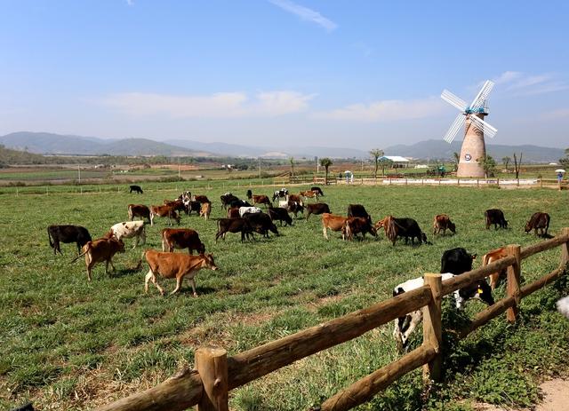 Đầu tư phát triển cả quy mô lẫn công nghệ, hệ thống trang trại của Vinamilk tăng trưởng ấn tượng - Ảnh 4.