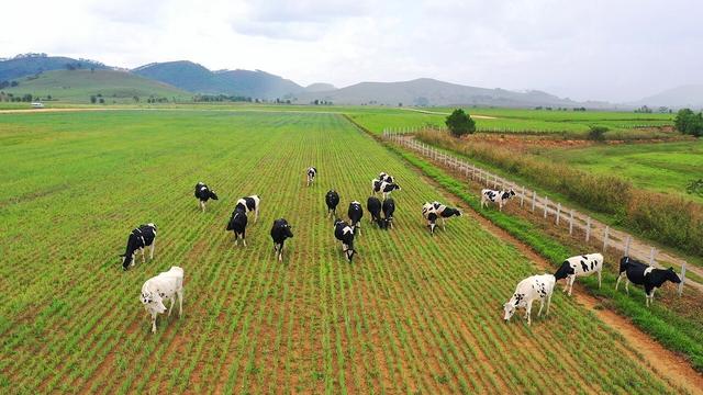 Đầu tư phát triển cả quy mô lẫn công nghệ, hệ thống trang trại của Vinamilk tăng trưởng ấn tượng - Ảnh 6.