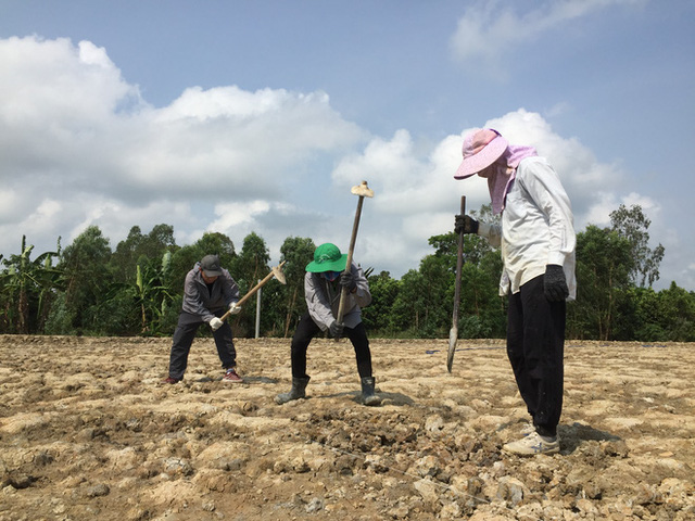 Từ Israel, vợ chồng 9x về quê làm nông nghiệp không hóa chất: Biến đất cứng như đá thành vườn dược liệu xanh mướt, sống rất hạnh phúc!  - Ảnh 2.