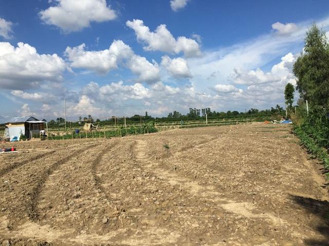 Từ Israel, vợ chồng 9x về quê làm nông nghiệp không hóa chất: Biến đất cứng như đá thành vườn dược liệu xanh mướt, sống rất hạnh phúc!  - Ảnh 3.