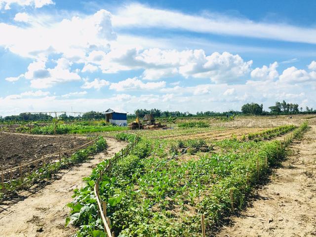 Từ Israel, vợ chồng 9x về quê làm nông nghiệp không hóa chất: Biến đất cứng như đá thành vườn dược liệu xanh mướt, sống rất hạnh phúc!  - Ảnh 4.