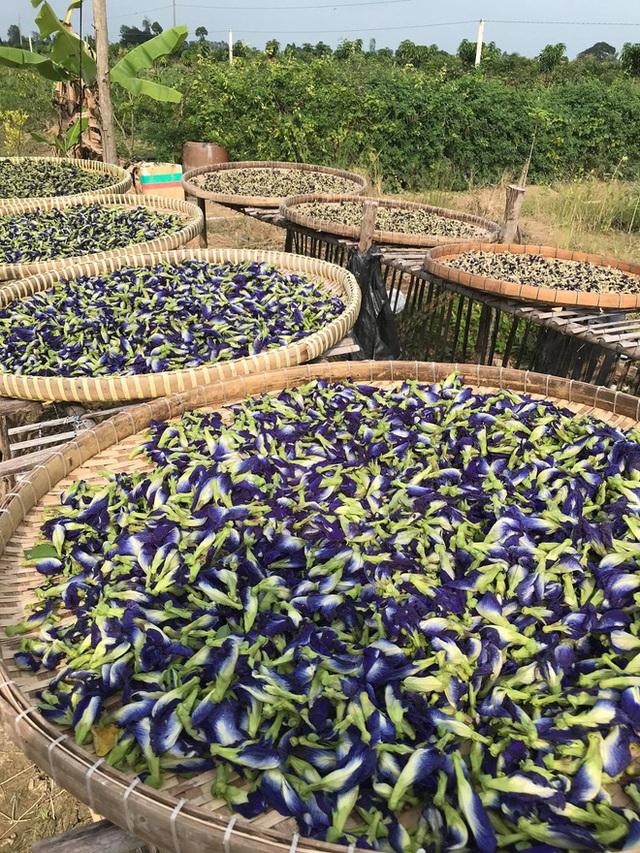Từ Israel, vợ chồng 9x về quê làm nông nghiệp không hóa chất: Biến đất cứng như đá thành vườn dược liệu xanh mướt, sống rất hạnh phúc!  - Ảnh 5.