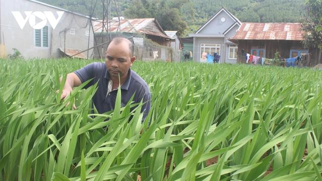 Nhiều nhà vườn ở Lâm Đồng lo lắng hoa Tết khó tiêu thụ  - Ảnh 1.