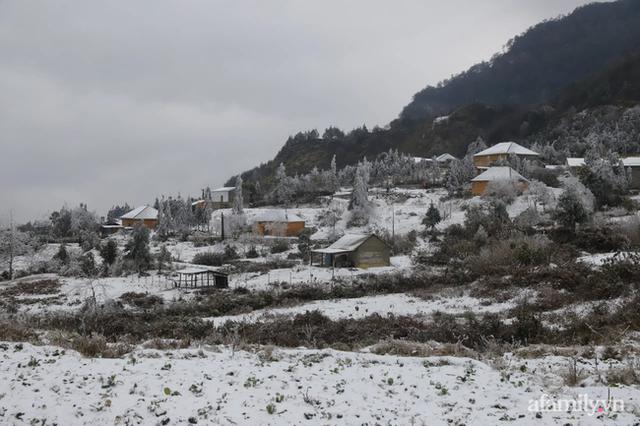 Ảnh: Đẹp ngỡ ngàng khung cảnh tuyết rơi phủ trắng đỉnh đồi Y Tý - Lào Cai, mùa săn tuyết chính thức bắt đầu! - Ảnh 2.