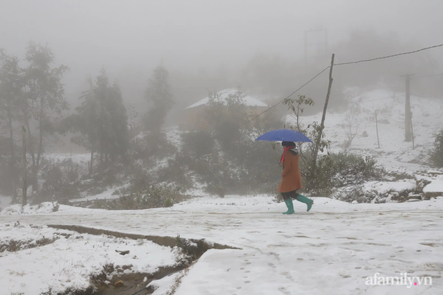 Ảnh: Đẹp ngỡ ngàng khung cảnh tuyết rơi phủ trắng đỉnh đồi Y Tý - Lào Cai, mùa săn tuyết chính thức bắt đầu! - Ảnh 13.