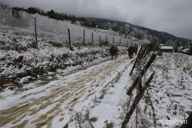 Ảnh: Đẹp ngỡ ngàng khung cảnh tuyết rơi phủ trắng đỉnh đồi Y Tý - Lào Cai, mùa săn tuyết chính thức bắt đầu! - Ảnh 15.