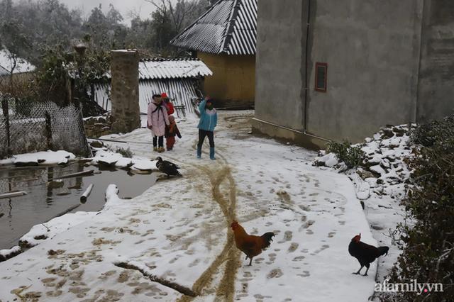 Ảnh: Đẹp ngỡ ngàng khung cảnh tuyết rơi phủ trắng đỉnh đồi Y Tý - Lào Cai, mùa săn tuyết chính thức bắt đầu! - Ảnh 16.