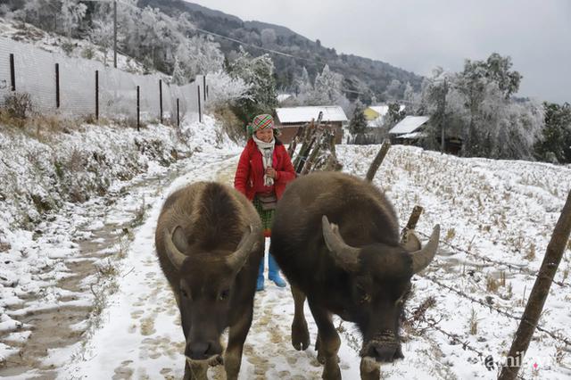 Ảnh: Đẹp ngỡ ngàng khung cảnh tuyết rơi phủ trắng đỉnh đồi Y Tý - Lào Cai, mùa săn tuyết chính thức bắt đầu! - Ảnh 18.