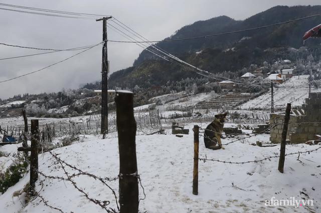 Ảnh: Đẹp ngỡ ngàng khung cảnh tuyết rơi phủ trắng đỉnh đồi Y Tý - Lào Cai, mùa săn tuyết chính thức bắt đầu! - Ảnh 3.