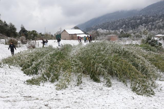 Ảnh: Đẹp ngỡ ngàng khung cảnh tuyết rơi phủ trắng đỉnh đồi Y Tý - Lào Cai, mùa săn tuyết chính thức bắt đầu! - Ảnh 25.
