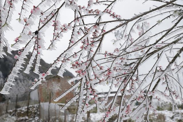 Ảnh: Đẹp ngỡ ngàng khung cảnh tuyết rơi phủ trắng đỉnh đồi Y Tý - Lào Cai, mùa săn tuyết chính thức bắt đầu! - Ảnh 26.
