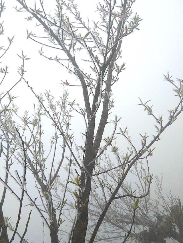 Nhiều nơi ở Nghệ An xuất hiện băng giá, cây cối, vật dụng đều bị đóng băng - Ảnh 12.