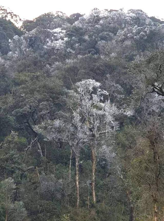 Nhiều nơi ở Nghệ An xuất hiện băng giá, cây cối, vật dụng đều bị đóng băng - Ảnh 3.