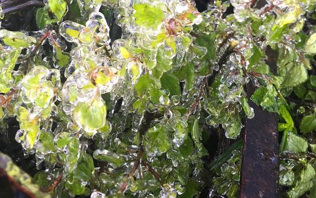 Nhiều nơi ở Nghệ An xuất hiện băng giá, cây cối, vật dụng đều bị đóng băng - Ảnh 8.