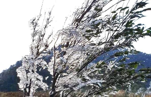 Nhiều nơi ở Nghệ An xuất hiện băng giá, cây cối, vật dụng đều bị đóng băng - Ảnh 9.