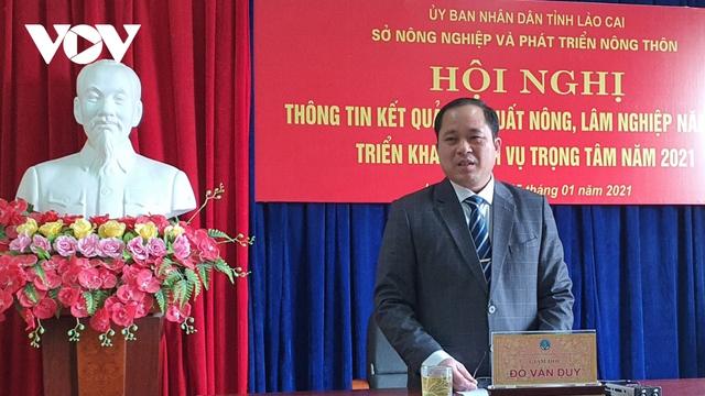 Lào Cai không dán tem truy xuất nguồn gốc cây đào - Ảnh 1.