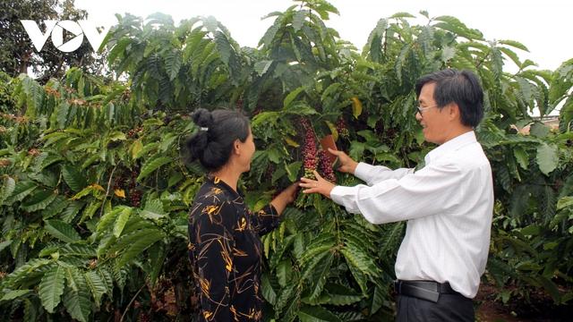 Cà phê Việt Nam hướng mục tiêu xuất khẩu 6 tỷ USD năm 2030 - Ảnh 1.