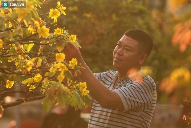[Ảnh] Hàng nghìn cây mai nở sớm trước Tết cả tháng, chủ vườn mất trắng 15 tỷ đồng - Ảnh 3.