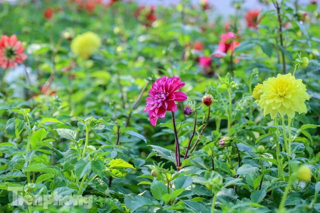 Hà Nội rực rỡ hoa chào mừng Đại hội Đảng lần thứ XIII - Ảnh 3.