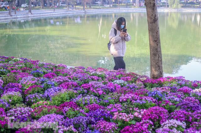 Hà Nội rực rỡ hoa chào mừng Đại hội Đảng lần thứ XIII - Ảnh 4.